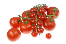 Free Tomatoes On White. Stock Photography - 5744962