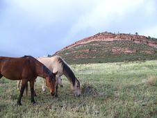 Free Range Horses Royalty Free Stock Photos - 5745008