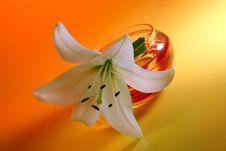 Free White Lily On Yellow. Stock Image - 5745081