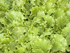 Free Salad Royalty Free Stock Photo - 5745085