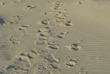 Free Footsteps Stock Images - 5745274