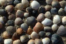 Free Shells On The Sand (background) Royalty Free Stock Image - 5745576