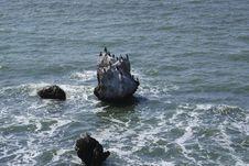 Free Cormorant S Rock Stock Image - 5745751