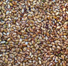 Free Abstract Alfalfa Seeds Royalty Free Stock Images - 5745789
