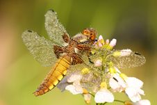 Free Dragonfly Royalty Free Stock Image - 5745876