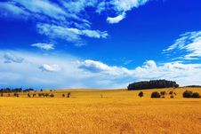 Free COUNTRY LANDSCAPE Royalty Free Stock Photo - 5746565