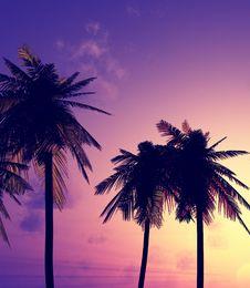Free Beautiful Sunset Royalty Free Stock Image - 5746816