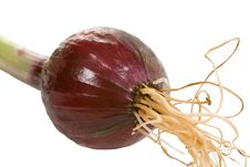 Small Red Onion Stock Image