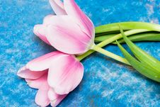 Free Pink Tulips Over Blue Royalty Free Stock Photography - 5749587