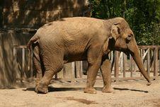 Free Elephant Royalty Free Stock Photography - 5749797