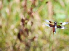 Free Black And Blue Dragonfly (right Side) Royalty Free Stock Images - 5749809