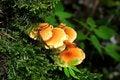 Free Mushroom Stock Photo - 5754760