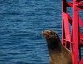 Free Harbor Seal On Buoy Stock Image - 5757851