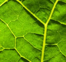 Free Green Leaf Texture Stock Photography - 5750862