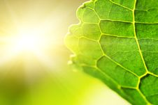 Free Green Leaf (shallow DoF) Royalty Free Stock Photography - 5750897