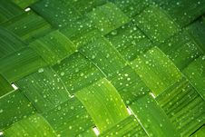 Free Green Background Stock Photos - 5750993