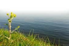 Free Single Flower Stock Image - 5751011
