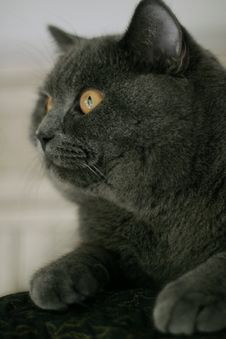 Free Cat Stock Photos - 5751383