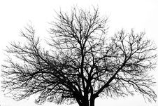 Free Tree Royalty Free Stock Photos - 5751728