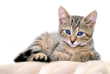 Free Kitty With Blue Eyes Stock Photos - 5751813