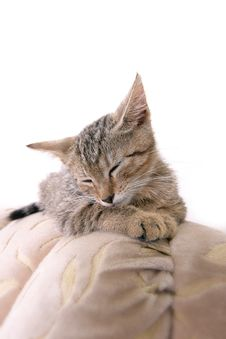 Free Sleeping Kitty Royalty Free Stock Images - 5751909