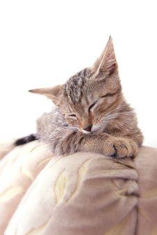 Free Sleeping Kitty Stock Image - 5751911