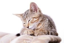 Free Sweet Kitty Stock Photography - 5751912