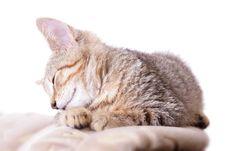 Free Sleeping Cat Stock Images - 5751914
