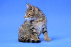 Free Kitty On Blue Background Stock Images - 5751924