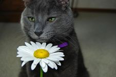 Free Cat Sniff Stock Photo - 5752640
