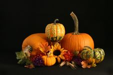 Free Pumpkin Still Life Stock Photography - 5752802