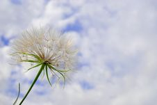 Free Dandelion Stock Photography - 5753362