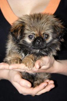 Free Dog Stock Photos - 5753603