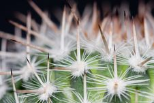 Free Cactus Close Up Royalty Free Stock Photography - 5753927