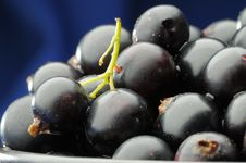 Free Black Currants. Stock Images - 5754884