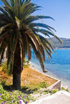 Free Palm Tree Stock Photos - 5754953