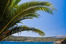 Free Palm Tree Stock Photos - 5755013