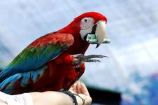 Free Red Macaw Show With Money Royalty Free Stock Photos - 5755038