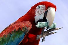 Free Red Macaw Show With Money Royalty Free Stock Image - 5755226