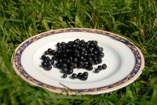 Free Berry On The Plate Royalty Free Stock Images - 5755239