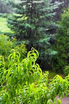 Free Rain Royalty Free Stock Images - 5755519