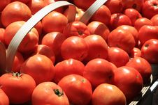Free Tomatoes Stock Images - 5756274