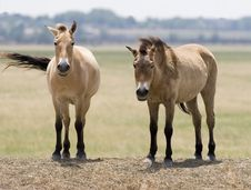 Free Two Horses Royalty Free Stock Photo - 5756285