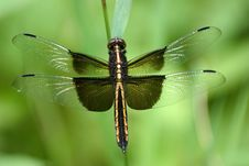 Free Dragonfly Royalty Free Stock Image - 5756286