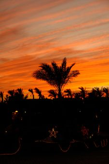Free Palm Tree On The Background Of The Evening Sky Stock Images - 5756424