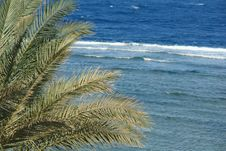 Free Palm Leaves On The Background Of The Red Sea Royalty Free Stock Photo - 5756605