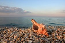Free Seashell On The Sea Coast Royalty Free Stock Photography - 5757197