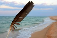 Free Feather On The Sea Coast Royalty Free Stock Image - 5757256