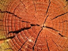 Sunlit Reddish Cross-section Of A Tree-trunk Royalty Free Stock Image
