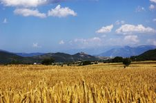 Free Wheat Landscape Stock Images - 5757504